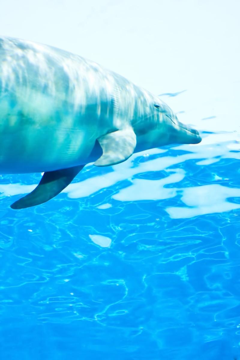 「水族館のイルカ」の写真