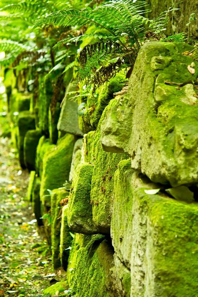 コケと崩れそうな石垣の写真
