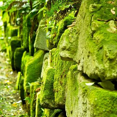 「コケと崩れそうな石垣」の写真素材