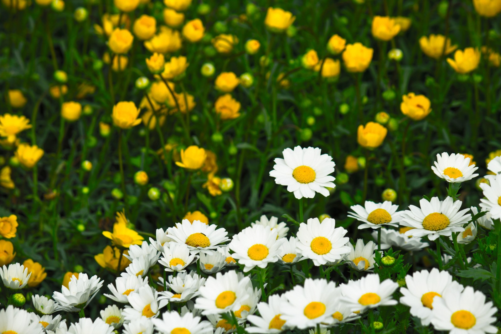 「庭園の花」の写真