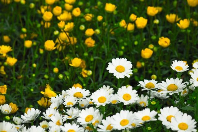 庭園の花の写真