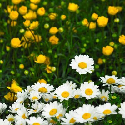「庭園の花」の写真素材