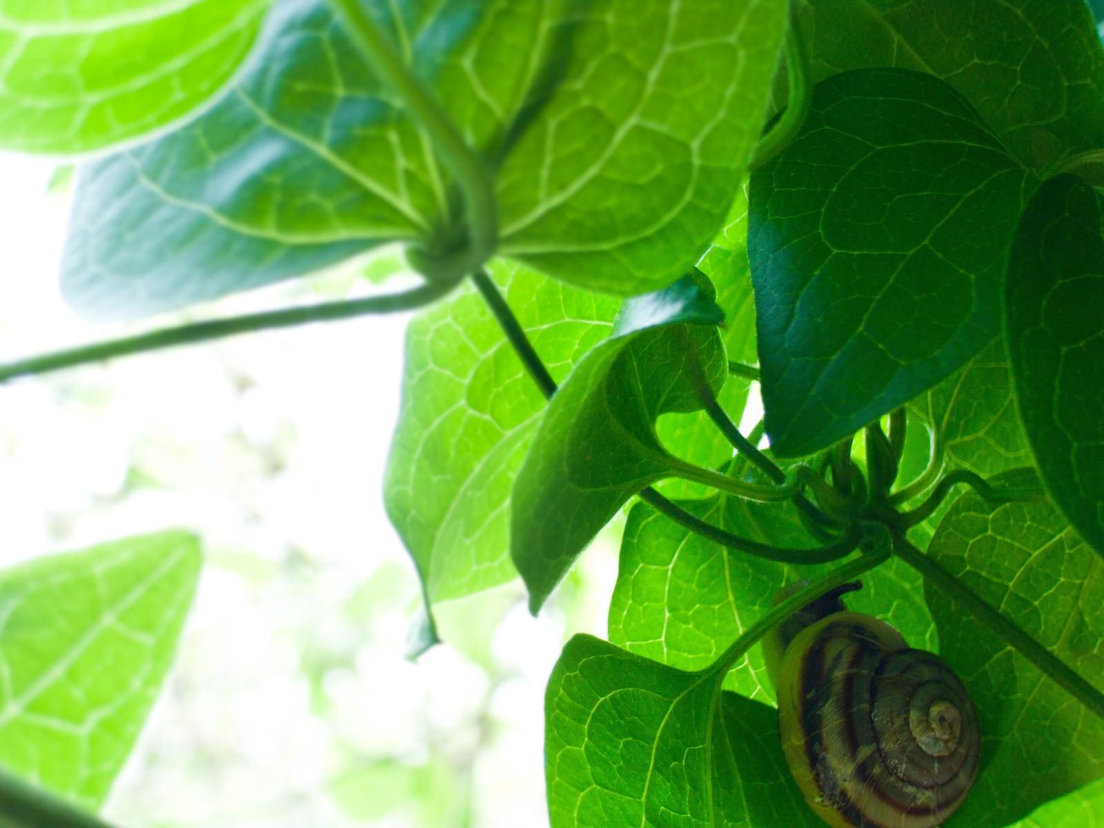 「葉っぱの裏側」の写真