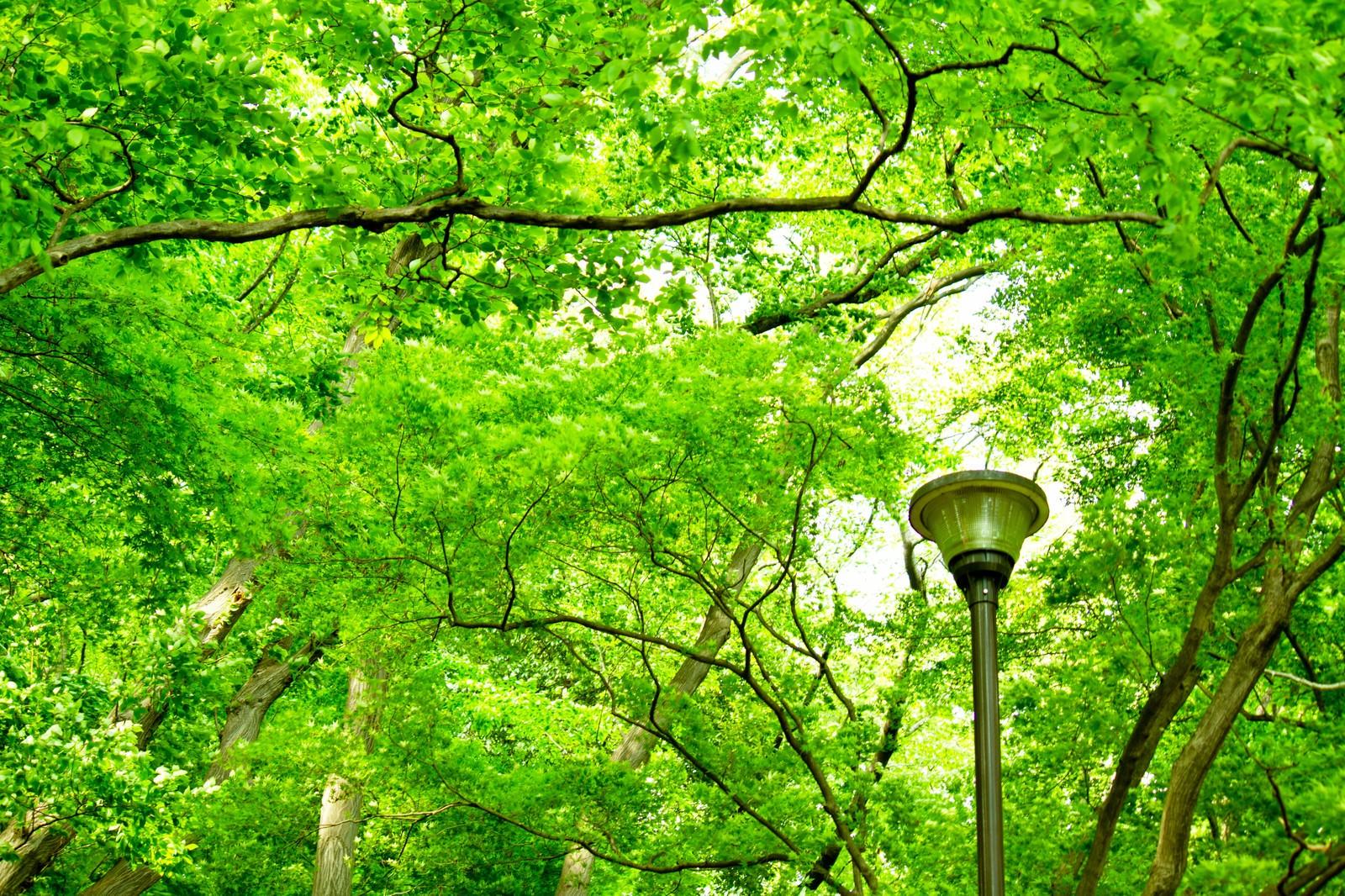 「木々と街灯」の写真