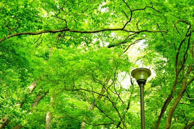 木々と街灯の写真