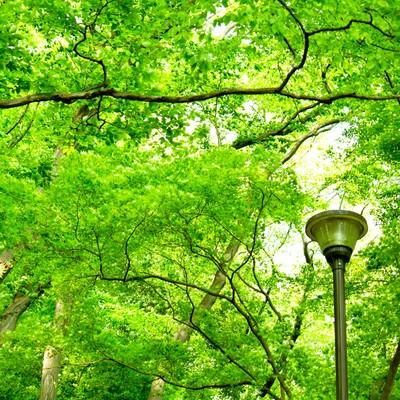 「木々と街灯」の写真素材