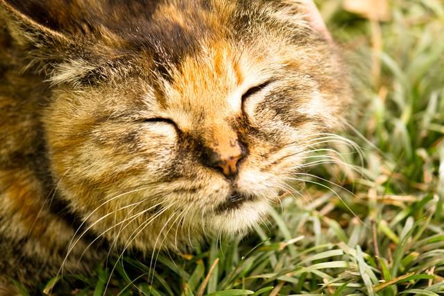 気持ちよさげな猫の写真