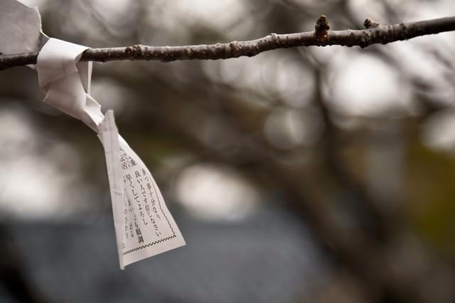 木に結ばれたおみくじの写真
