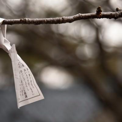 「木に結ばれたおみくじ」の写真素材