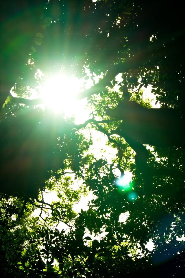 猿島の木漏れ日の写真