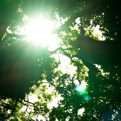 「猿島の木漏れ日」の写真素材