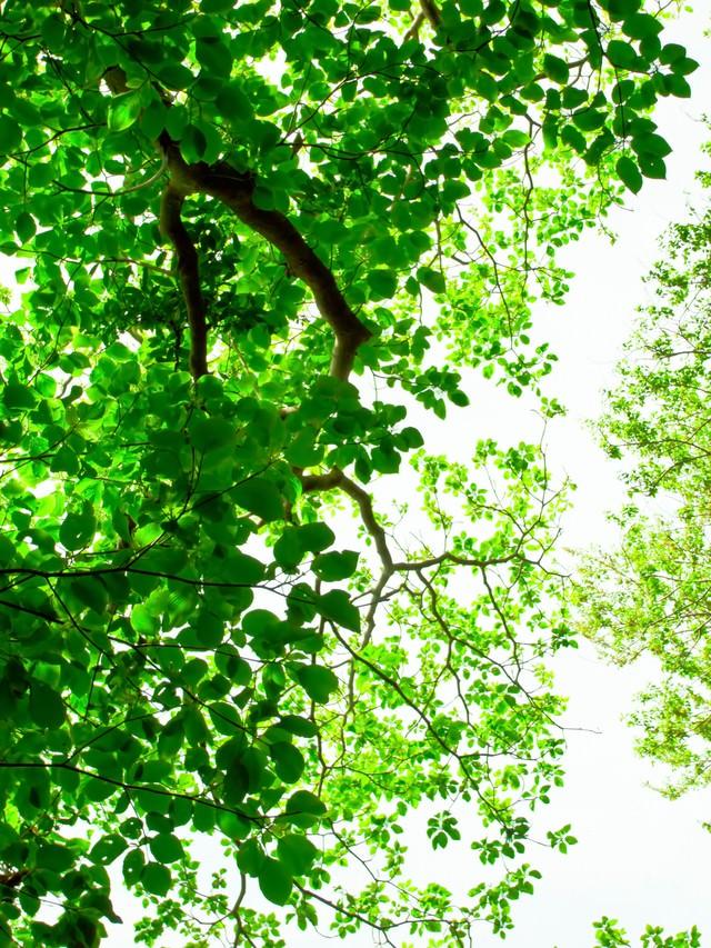 緑林と木漏れ日の写真