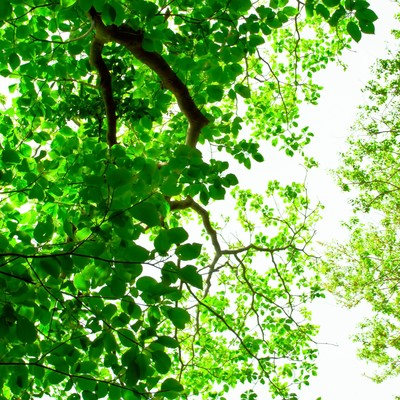 「緑林と木漏れ日」の写真素材