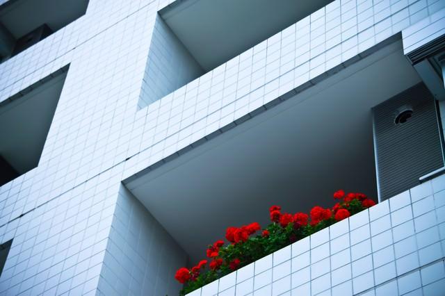マンションと赤い花の写真