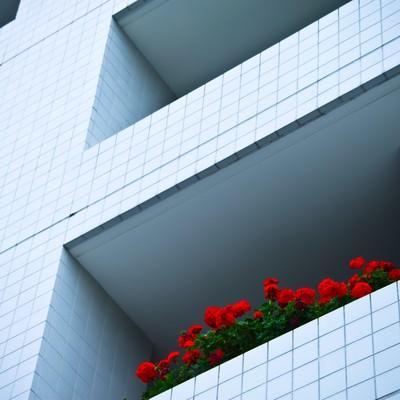 「マンションと赤い花」の写真素材