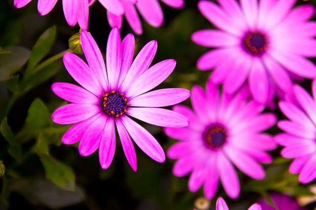 紫色の花の写真