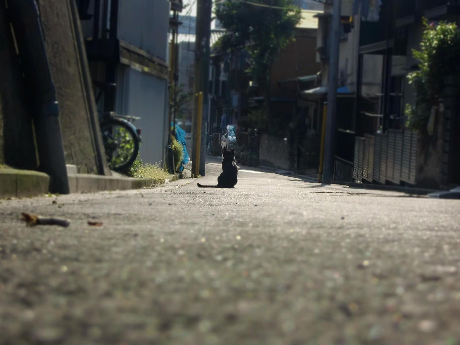 「主人の帰りを待つ猫」の写真