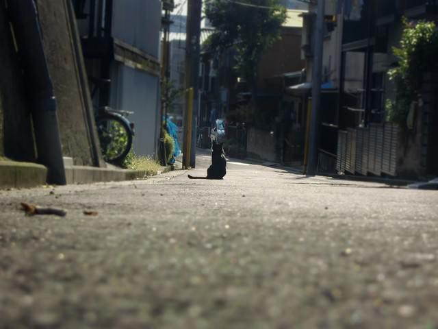 主人の帰りを待つ猫の写真