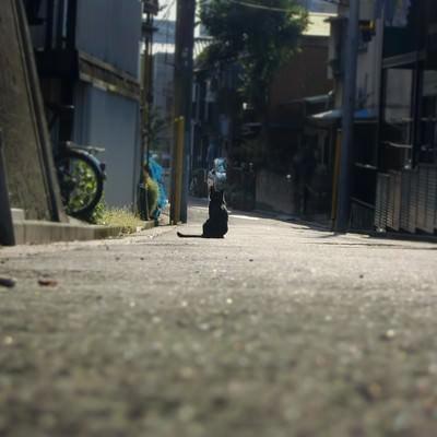 「主人の帰りを待つ猫」の写真素材