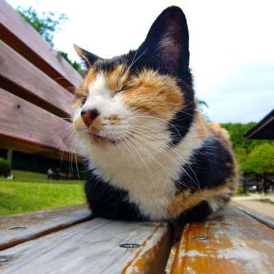 「ベンチに座る猫(ブチ)」の写真素材