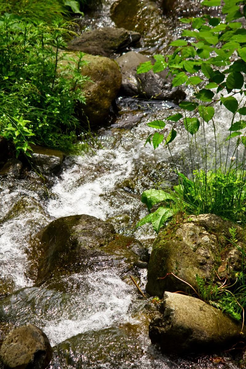 「小川の清流」の写真