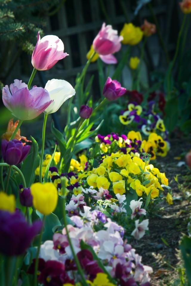 花壇に咲く花々の写真