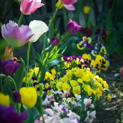 「花壇に咲く花々」の写真素材