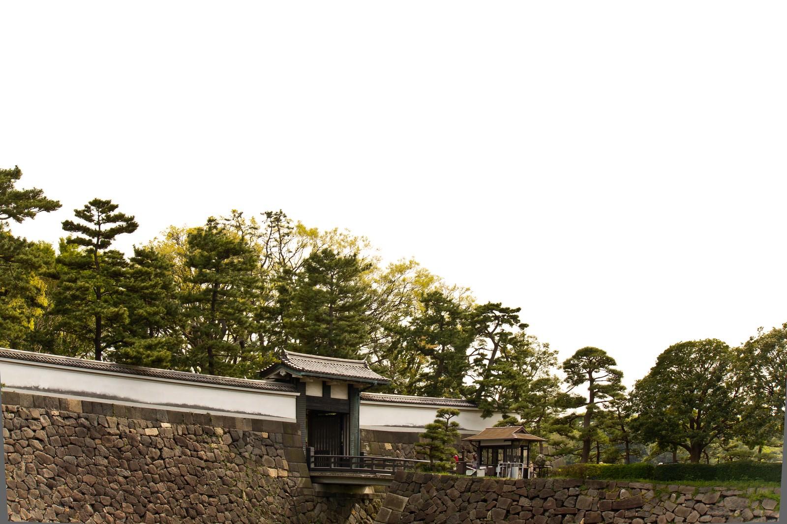 「皇居のお堀と松」の写真