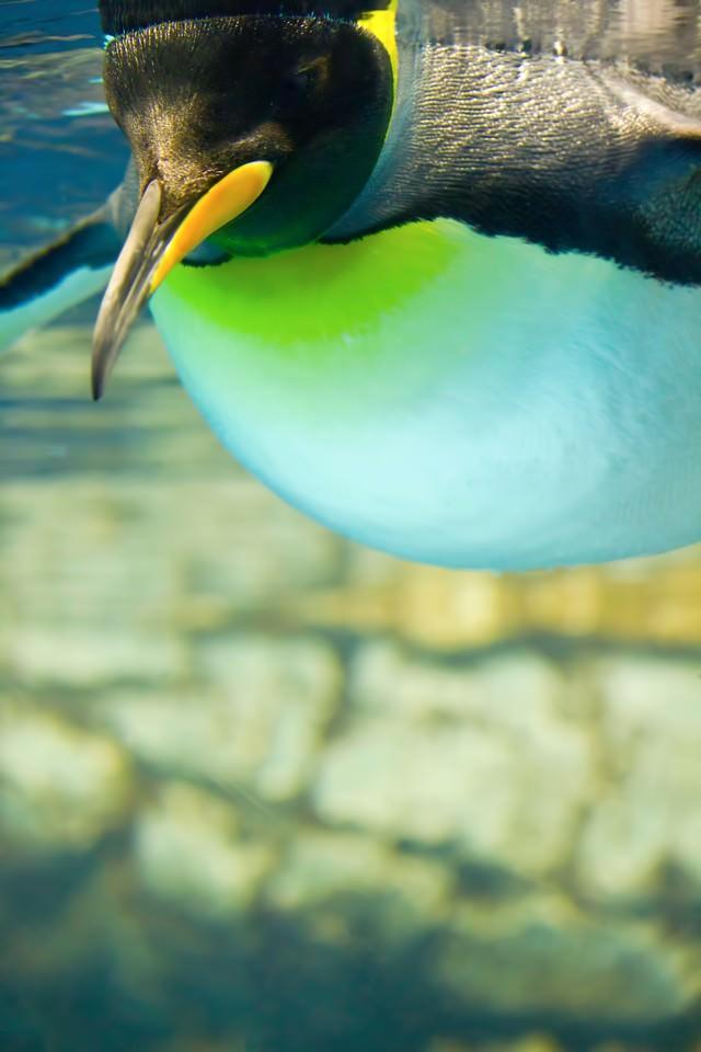 水族館のペンギンの写真