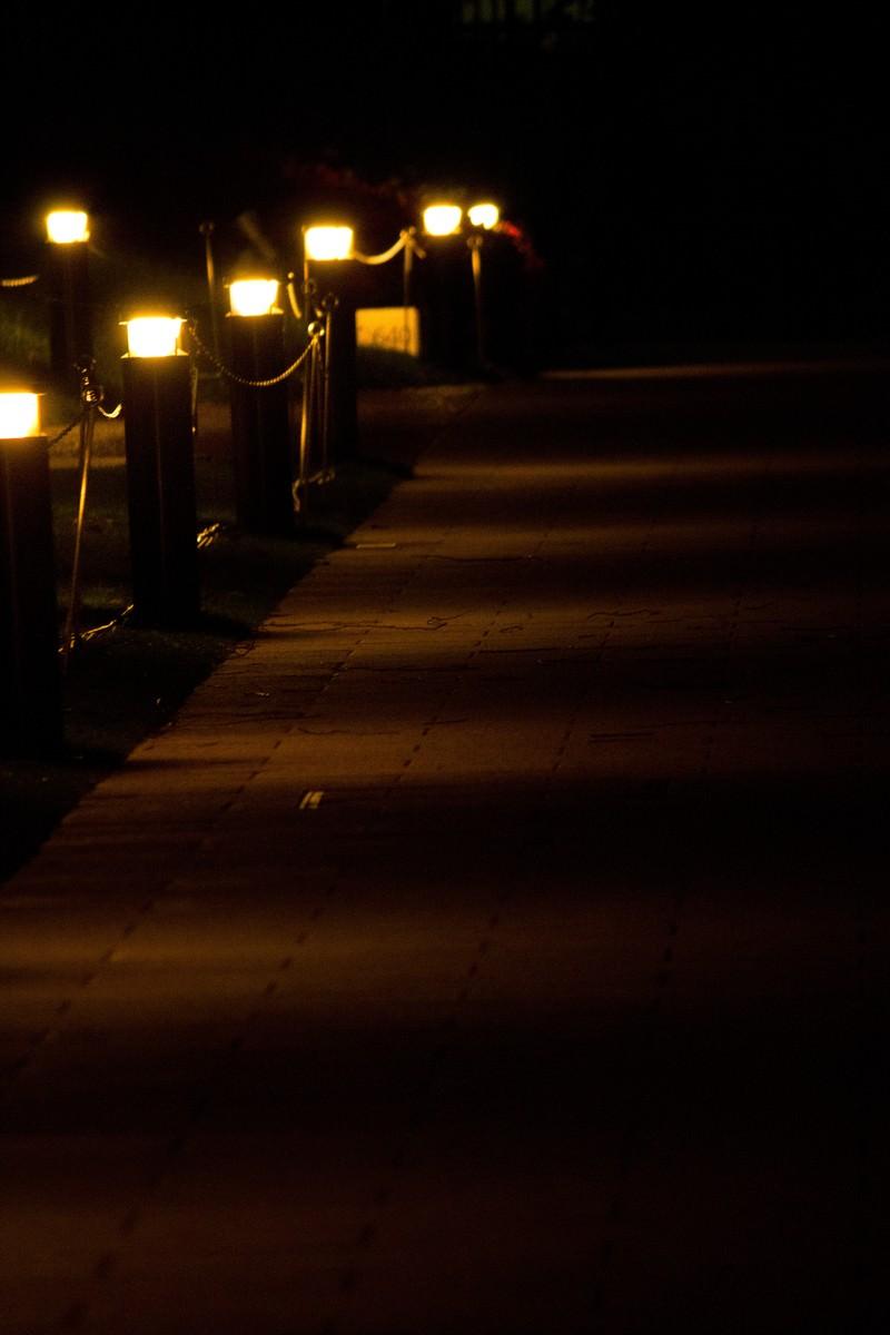 「夜道を照らす灯り」の写真