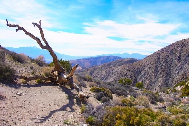 ジョシュア・ツリー国立公園の山の写真