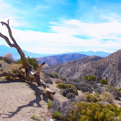 「ジョシュア・ツリー国立公園の山」の写真素材