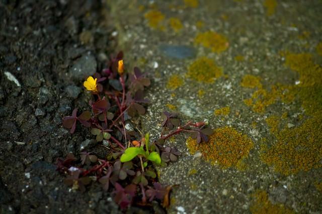 アスファルトと雑草の写真