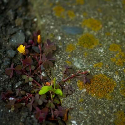 「アスファルトと雑草」の写真素材