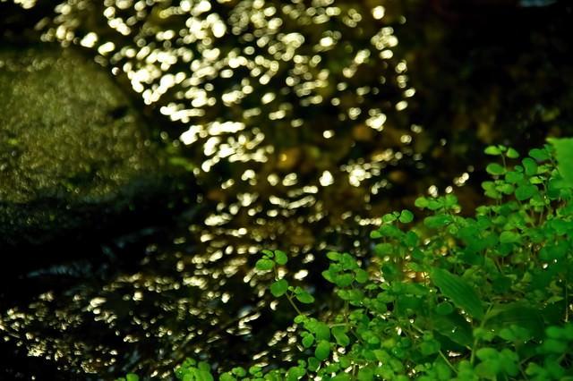 小川のせせらぎの写真