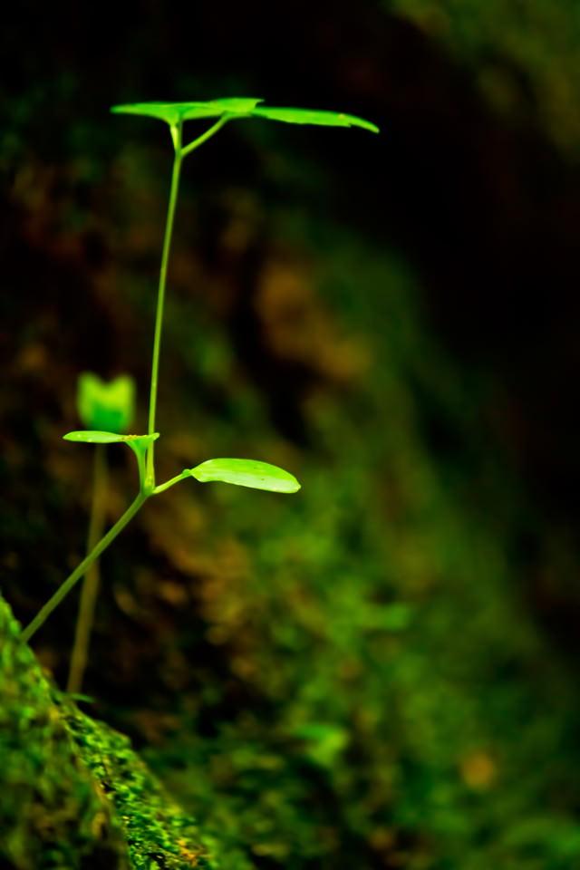 岩場の新芽の写真