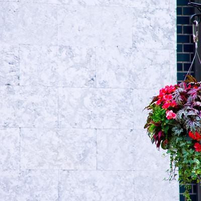 「吊るされた鮮やかな花」の写真素材