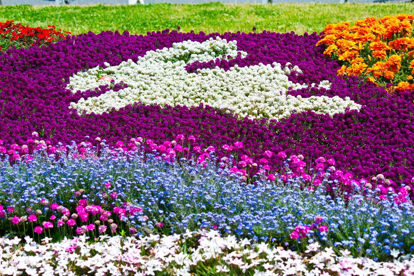 「うさぎ模様の花壇」の写真