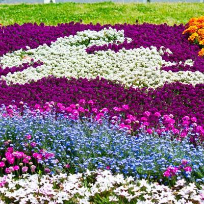 うさぎ模様の花壇の写真
