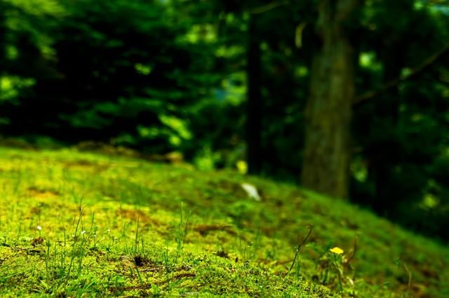 山の上の野原の写真