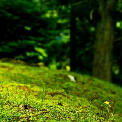 「山の上の野原」の写真素材