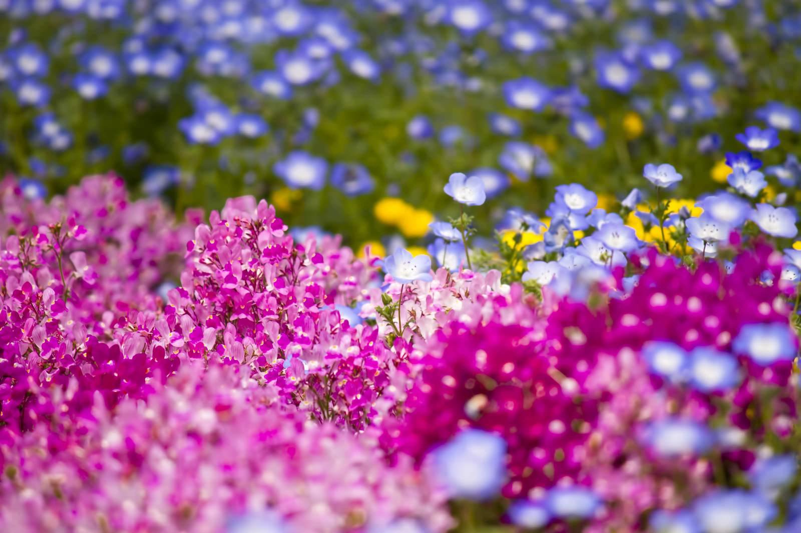 「山下公園の花壇」の写真