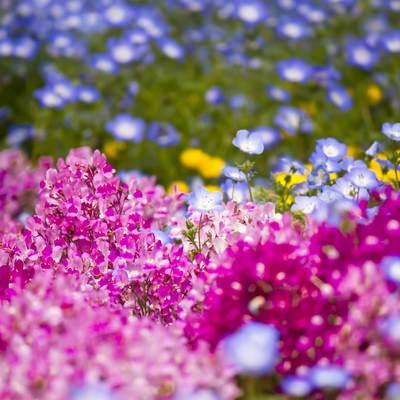 「山下公園の花壇」の写真素材