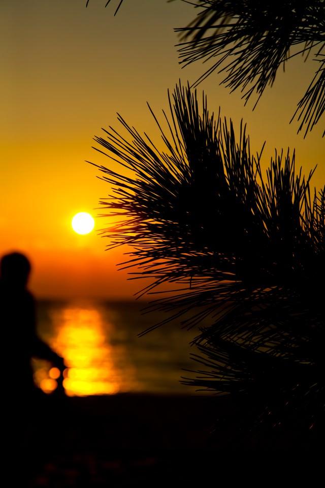 夕焼けとヤシの木の写真