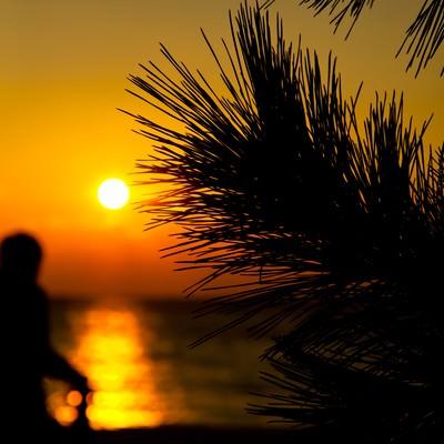 「夕焼けとヤシの木」の写真素材