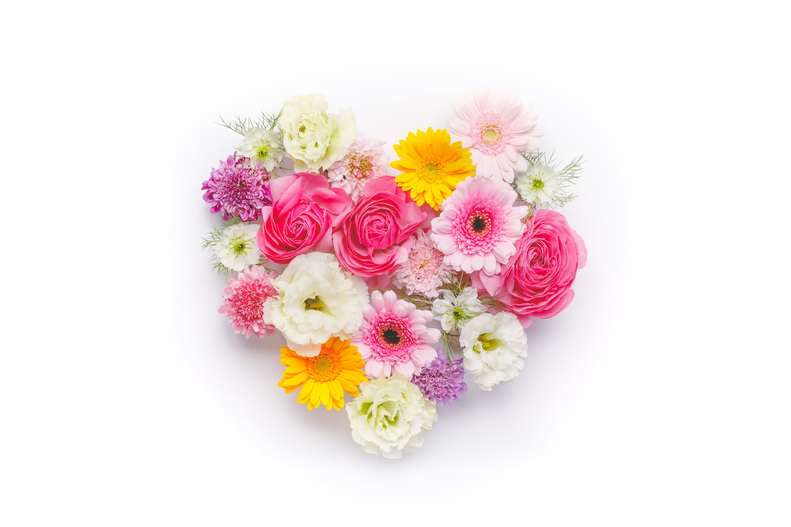 「ハート型の花」の写真