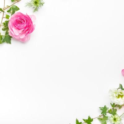「アイビーと薔薇のフレーム」の写真素材