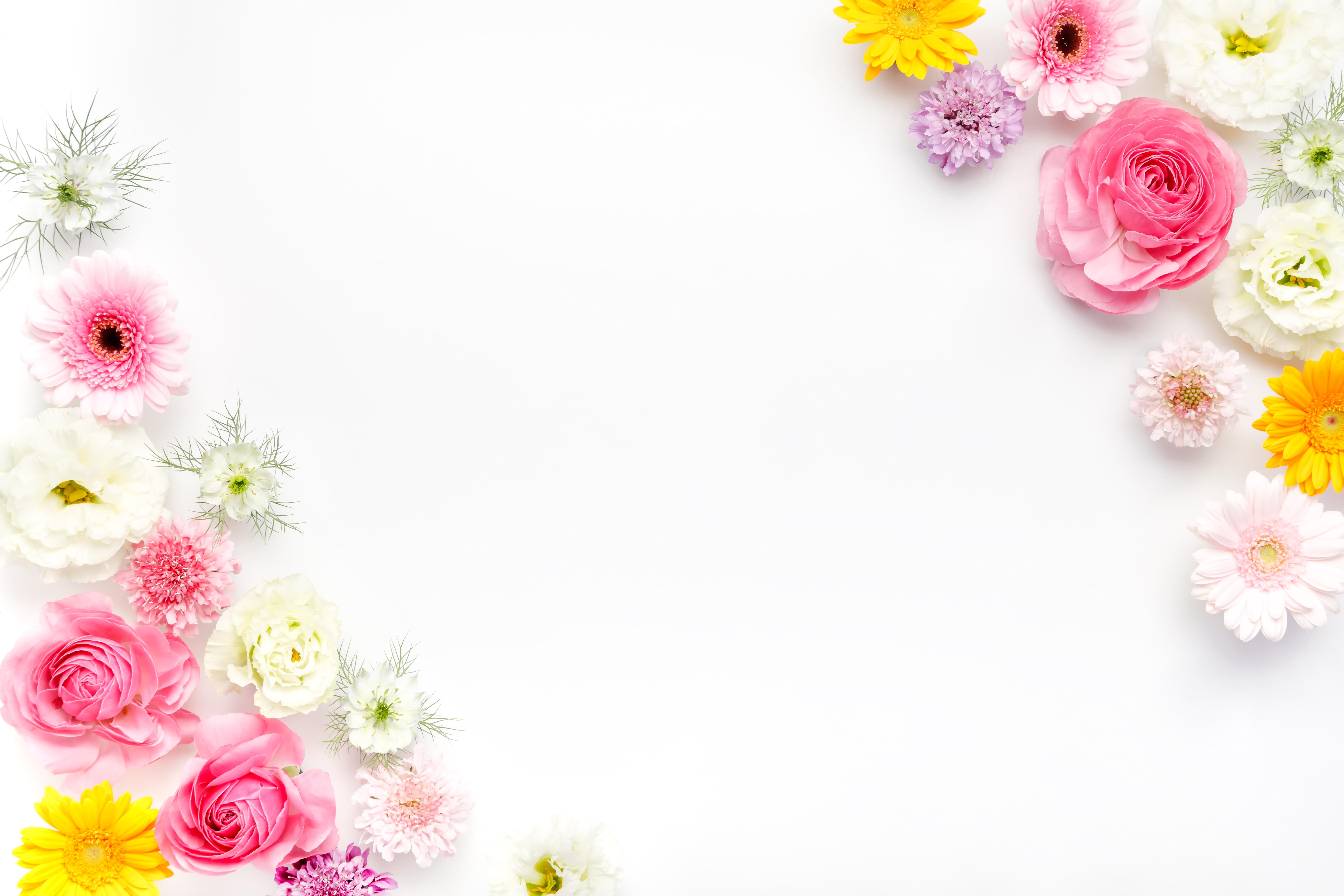 フレーム・背景に使いやすい薔薇や生花 ぱくたそフリー素材