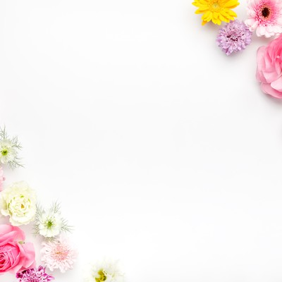フレーム・背景に使いやすい薔薇や生花の写真