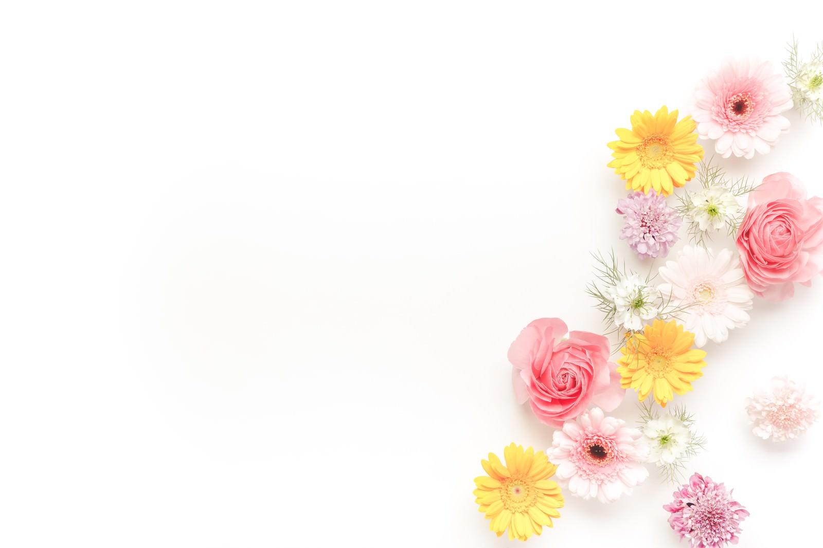 メッセージが入れやすい花の背景|ぱくたそフリー素材